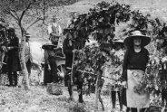 Foto storica dell'azienda vinicola