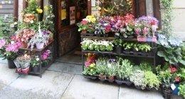 personale esperto, fiori fiori freschi