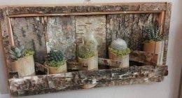 servizi a domicilio, piante cactus, aghi