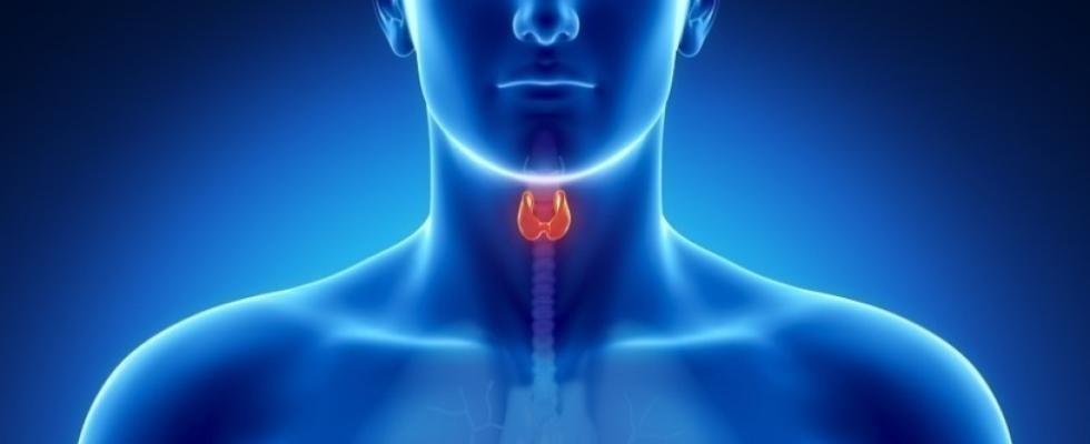 specialista in tiroide Latina