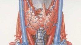 specialista in malattie della tiroide