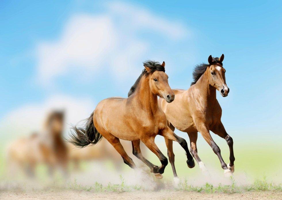 Due cavalli che galoppano