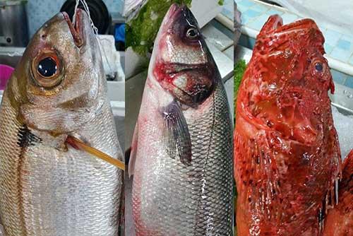 servizio fornitura pesce fresco ai ristoranti
