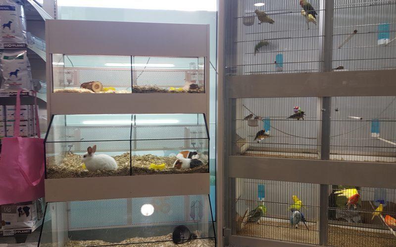 gabbie con roditori ed uccelli