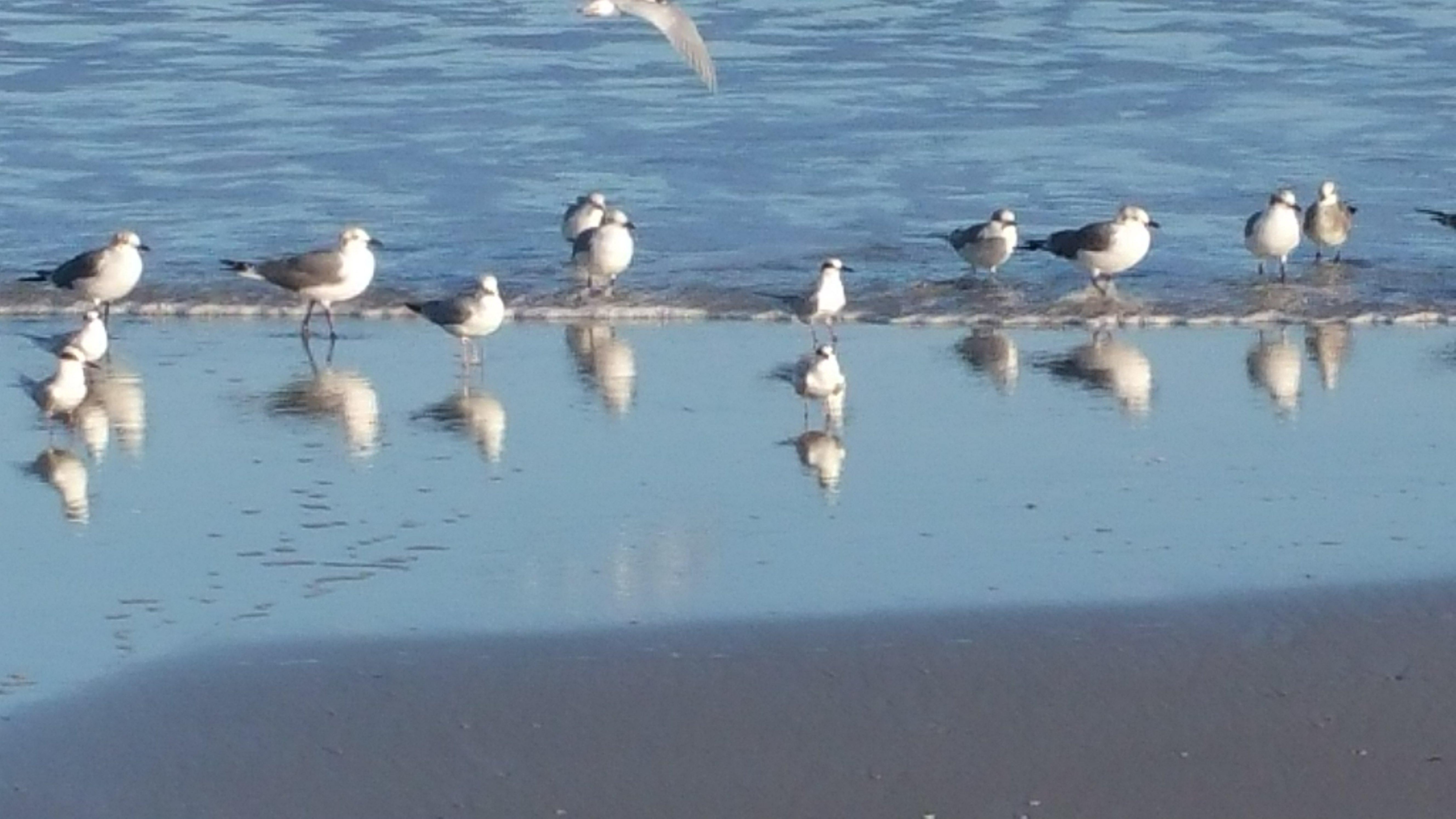 Atlantic Ocean NE Florida Ponte Vedra Beach seagulls