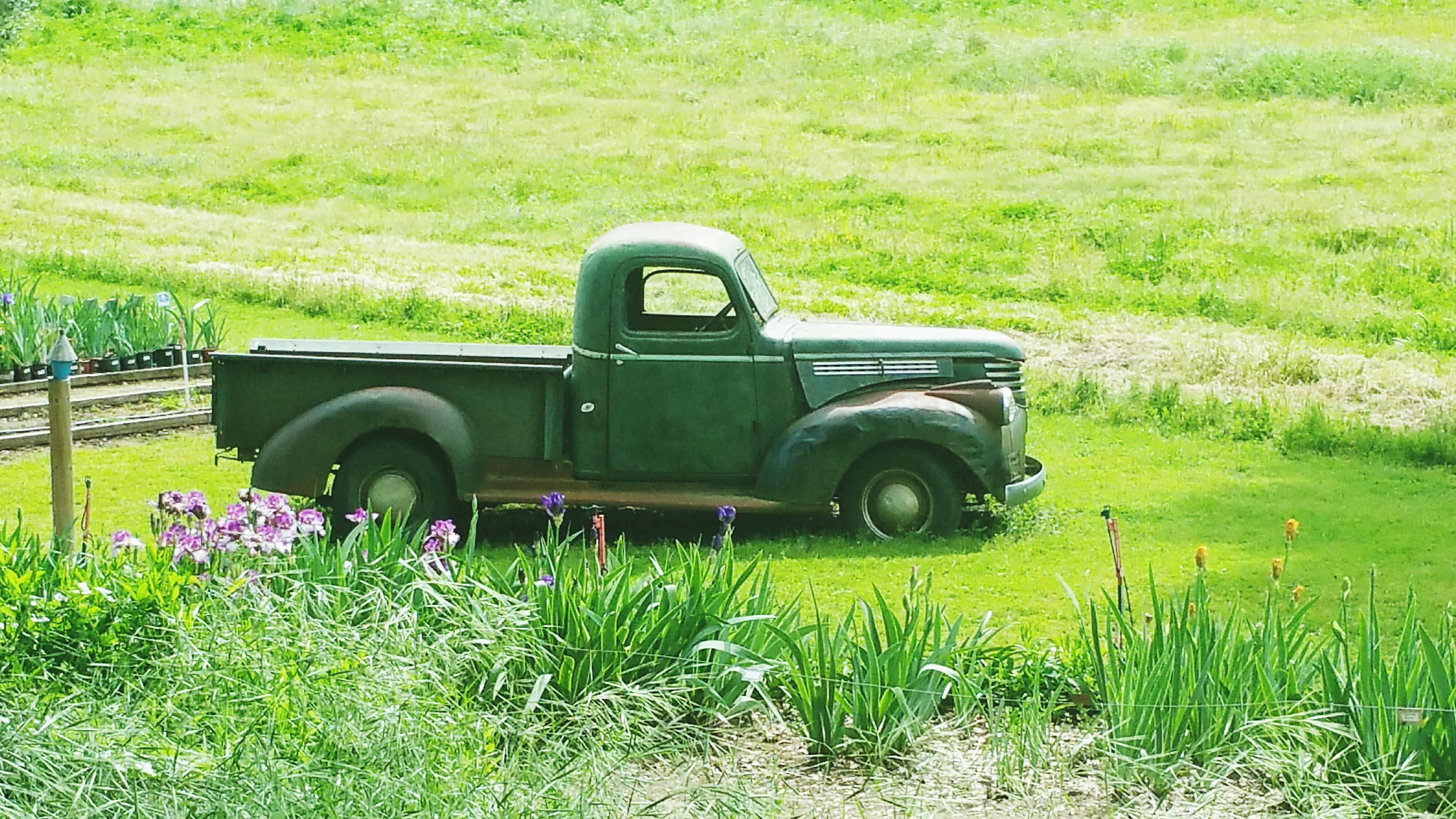 vintage pickup truck and iris