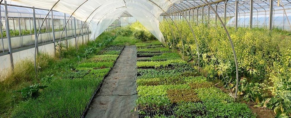 coltivazione e vendita ortaggi bio
