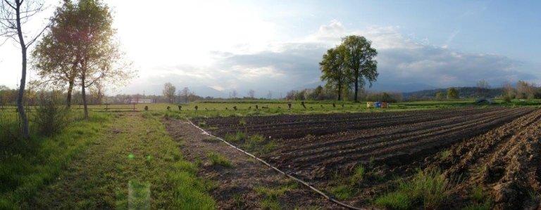 azienda agricola il tarassaco