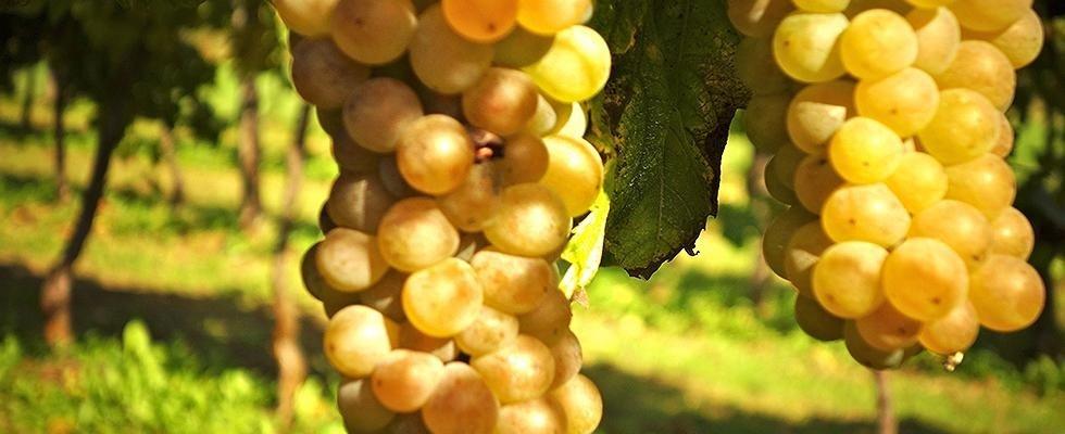 coltivazione e vendita frutta bio