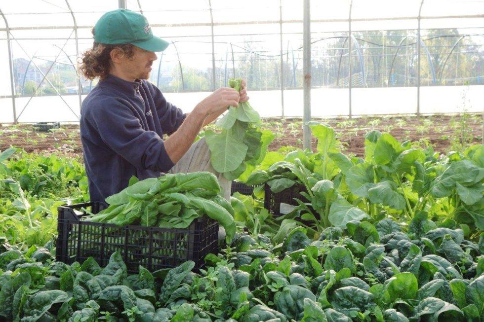 coltivazioni biologiche