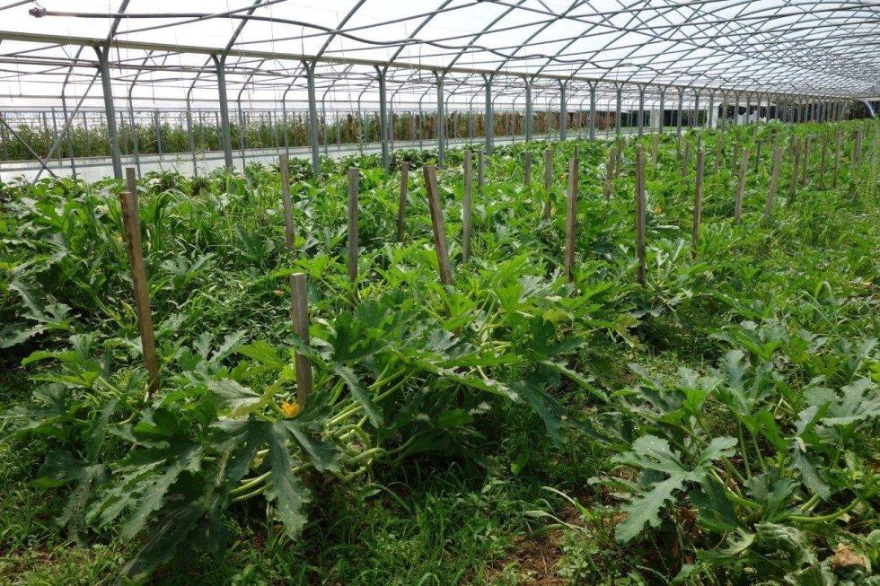 vendita ortaggi bio km 0