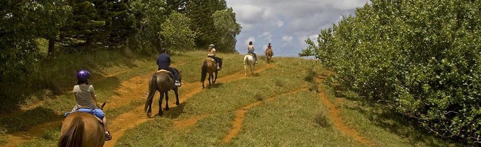 Maneggio cavalli Tivoli