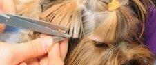 taglio pelo