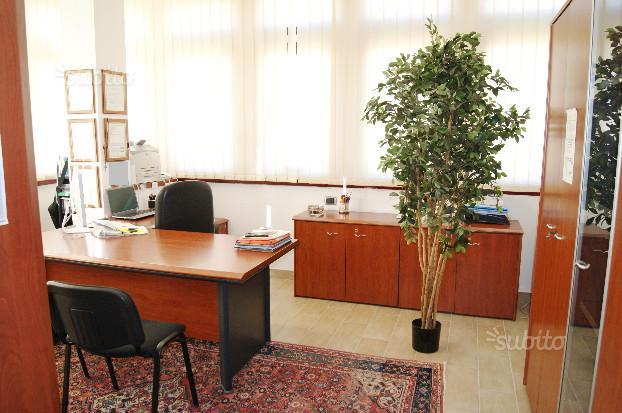 ufficio con tappeto sotto la scrivania e pianta