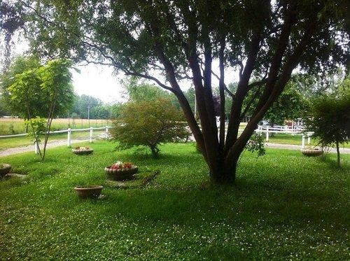 un albero e del prato