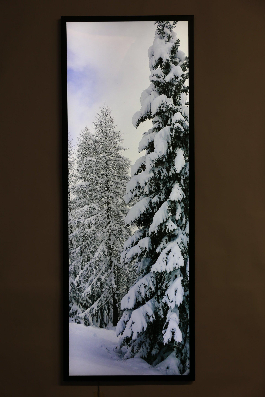 quadro luminoso di alberi innevati
