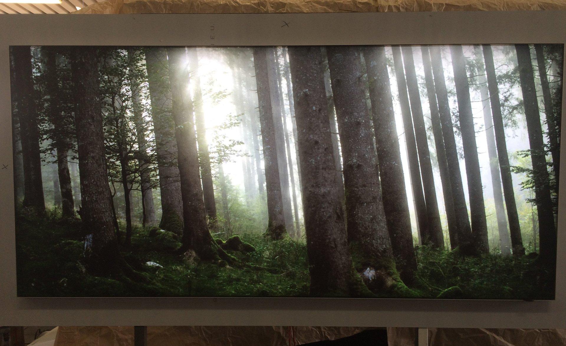 quadro luminoso di un bosco