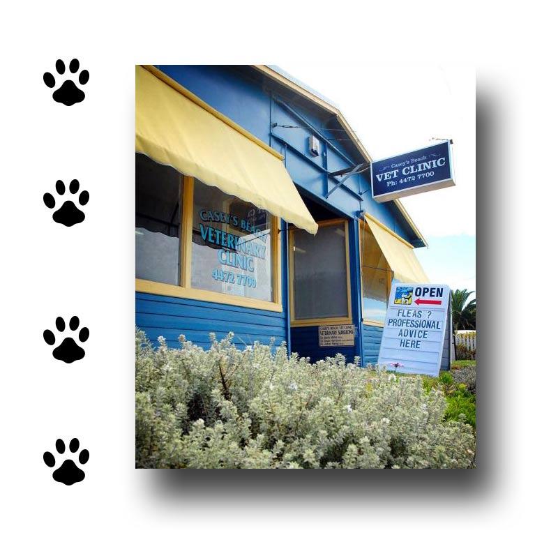 caseys beach veterinary clinic glass window outside