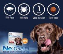 caseys beach veterinary clinic nexgard