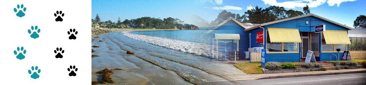 caseys beach veterinary clinic beach