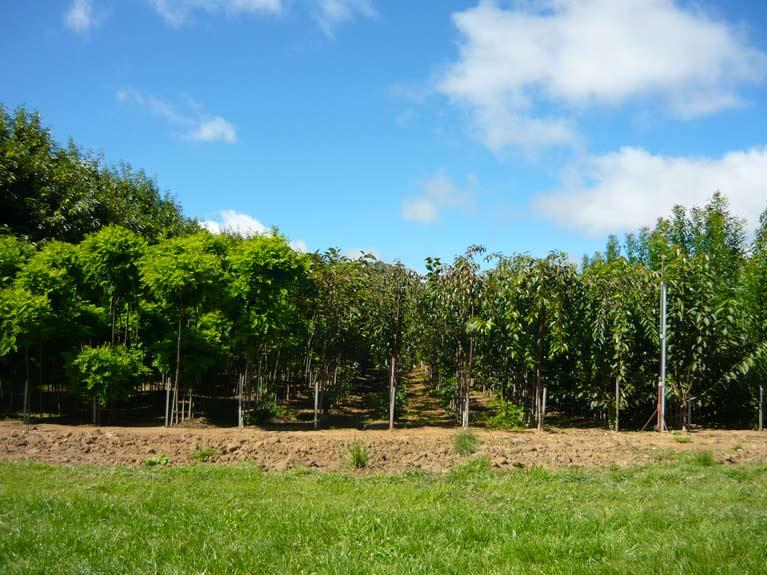 trees growing in nursery
