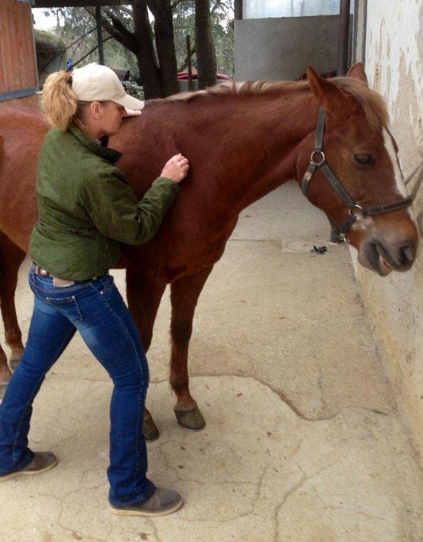 riabilitazione muscolare cavalli