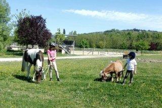 Pony fattoria didattica