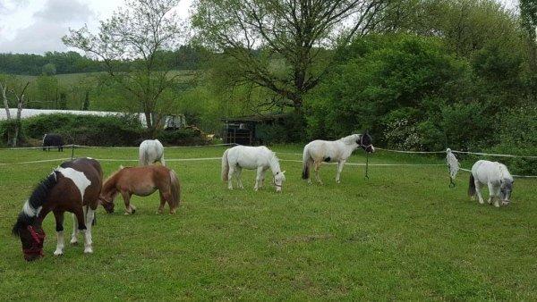 Pony del nostro Centro Ippico
