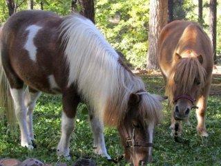 Corsi di pony per bambini Toscana