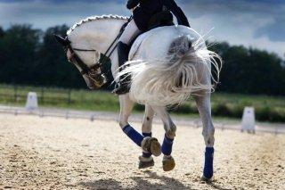 Scuola equitazione dressage
