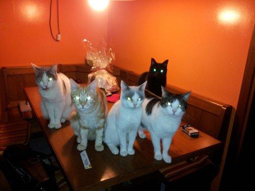Cinque gatti su un tavolo