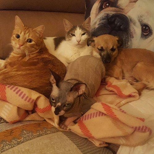 Cani e gatti acciambellati su un letto