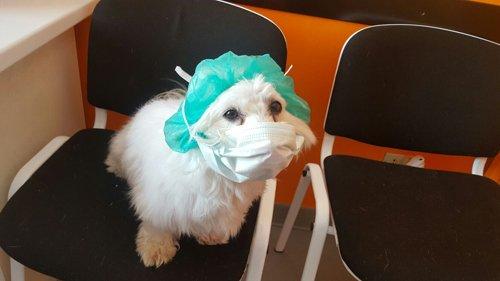 Un cane travestito da veterinario