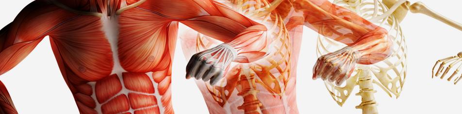 fisiochinesiterapia