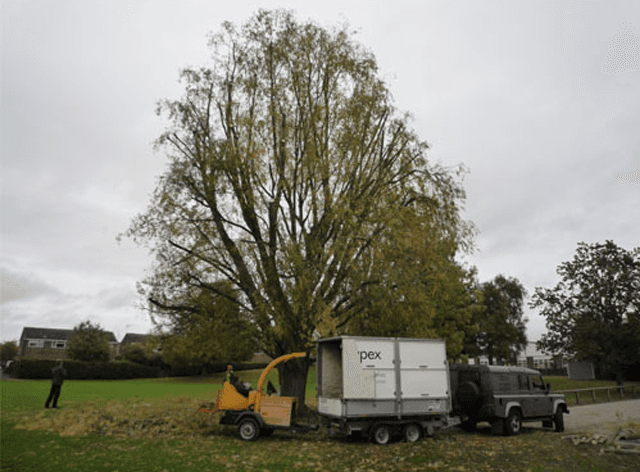 Tree pruning solutions