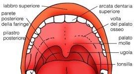 la bocca - parte superiore
