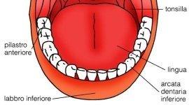 la bocca - parte inferiore