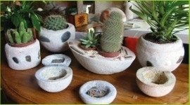 vendita piante ornamentali