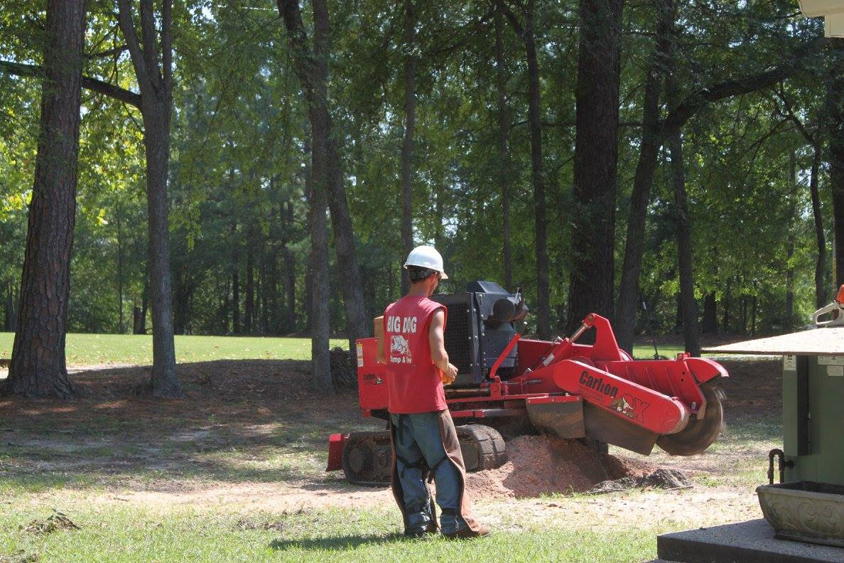 stump removal Augusta, GA