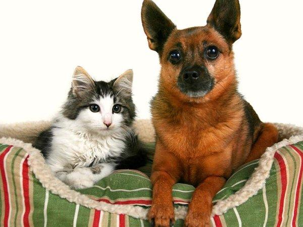 vaccini cani treviso