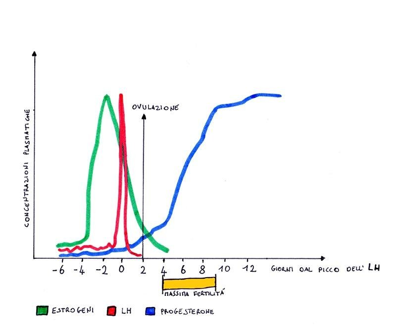 grafico ovulazione cagna