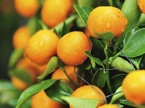 vendita frutta ingrosso