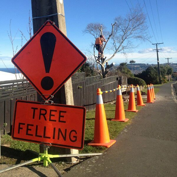 Warning sign for tree felling