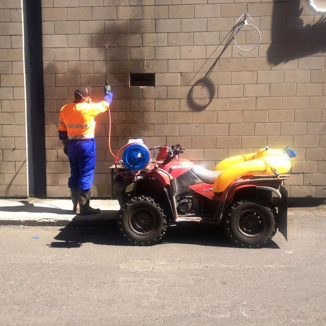 Insect spraying in Dunedin