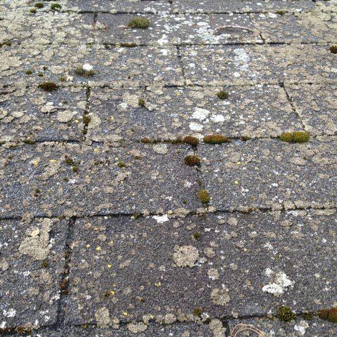 Moss, mildew, lichen spraying services in Dunedin