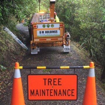 Specialist tree care in Dunedin