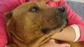 assistenza domiciliare diurna, consulenza comportamentale, vaccinazione animali