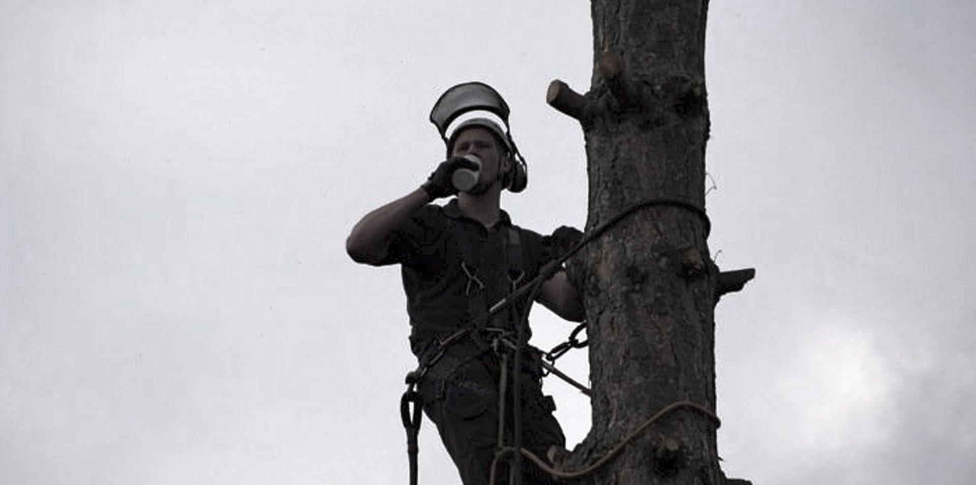 tree specialist