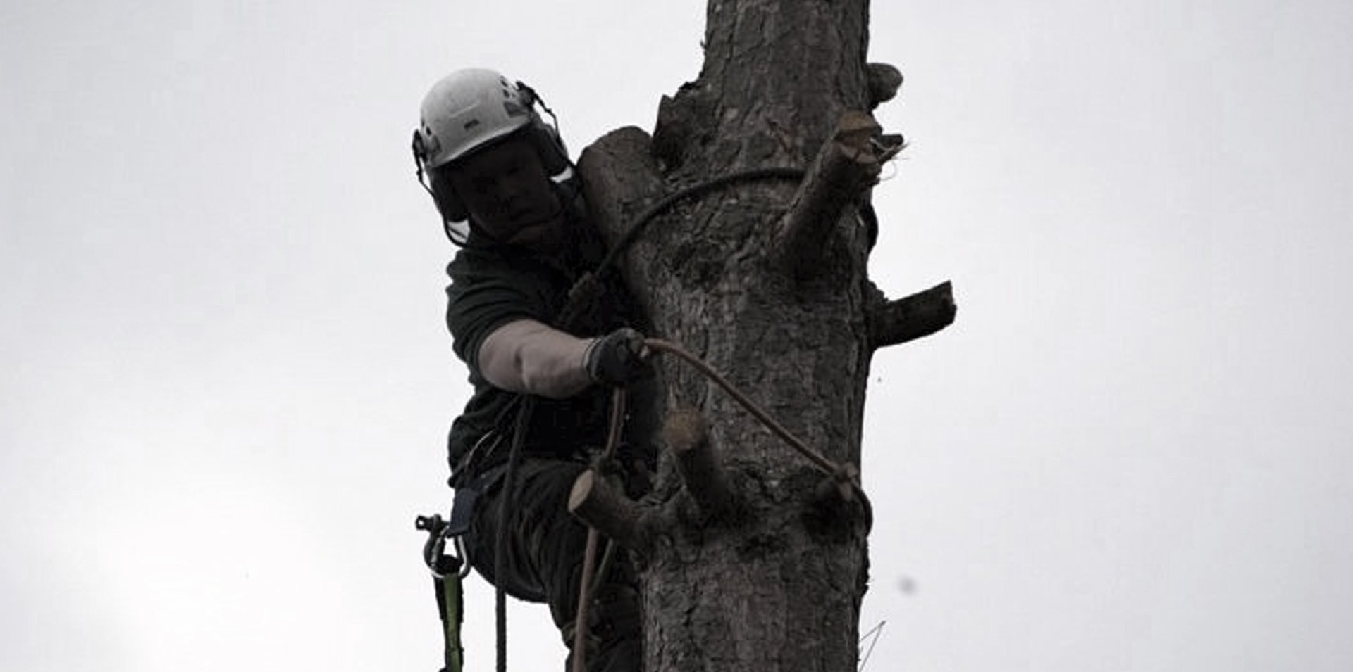 branch being cut