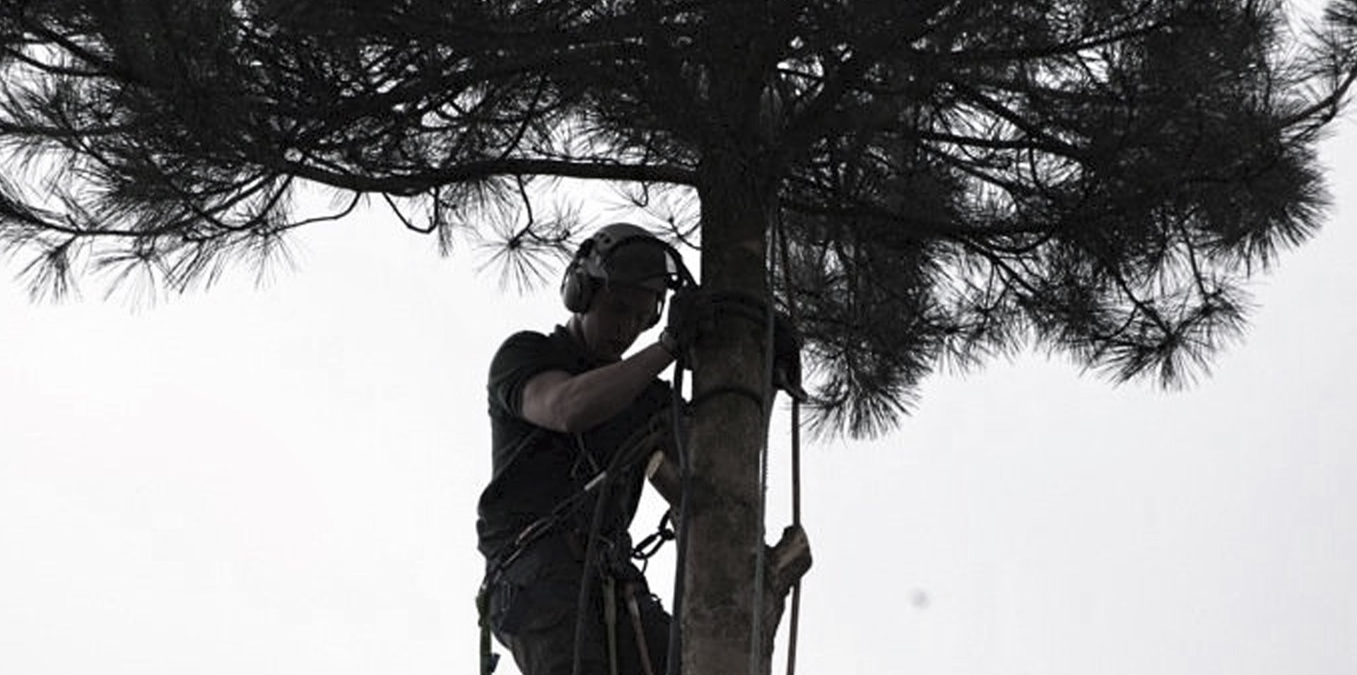 tree surgeon at work